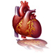 Acute and chronic heart failure in children