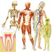 Anatomy 1 for students of Dental Medicine